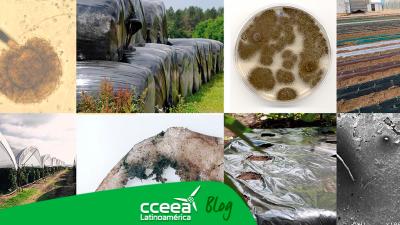 Científicos descubren hongo capaz de degradar el plástico