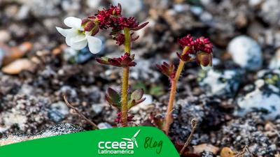 El Ártico y la nueva adaptación de sus plantas, especies más altas