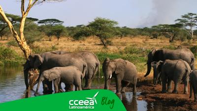 La WWF informa la disminución de animales por actividades humanas