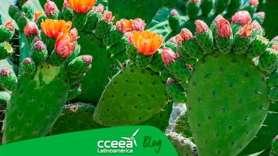 Bioplástico es desarrollado a partir de plantas suculentas