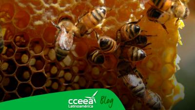 En Alemania buscan salvar a las abejas