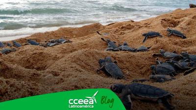 La tortuga verde sufrirá los efectos del calentamiento global