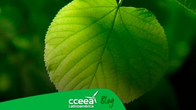 Desarrollan hoja artificial capaz de convertir el CO2 en combustible