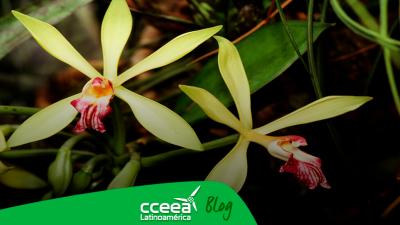 Las orquídeas se encuentran en peligro por la deforestación